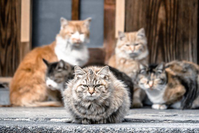集まる5匹の猫