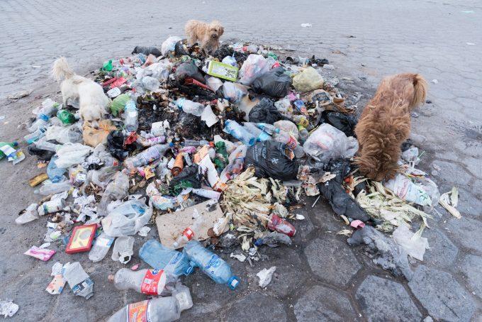 ごみを漁る野良犬