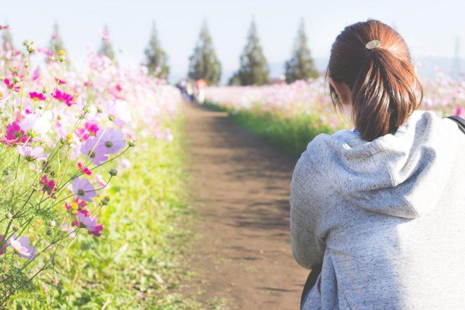 コスモス畑を眺める女性の後ろ姿