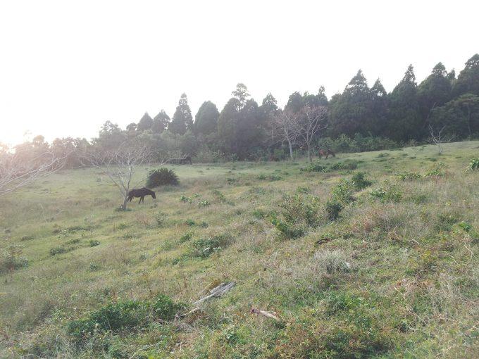 山の斜面にいる御崎馬