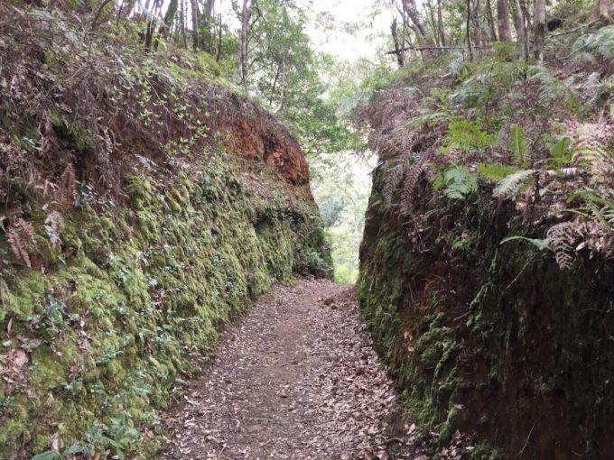 両脇が苔蒸した壁に挟まれた道