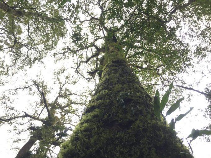 木の幹を覆い尽くす苔