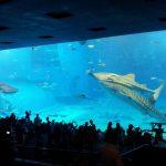 【沖縄記12】コンビニ経由で美ら海水族館が割引!4人家族で1000円お得