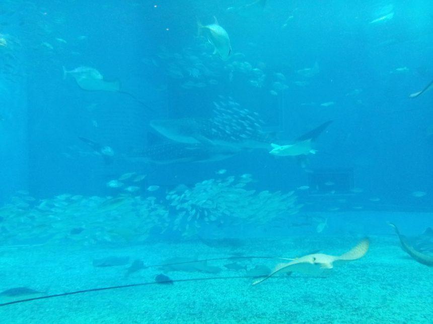 水槽の中の魚の群れ