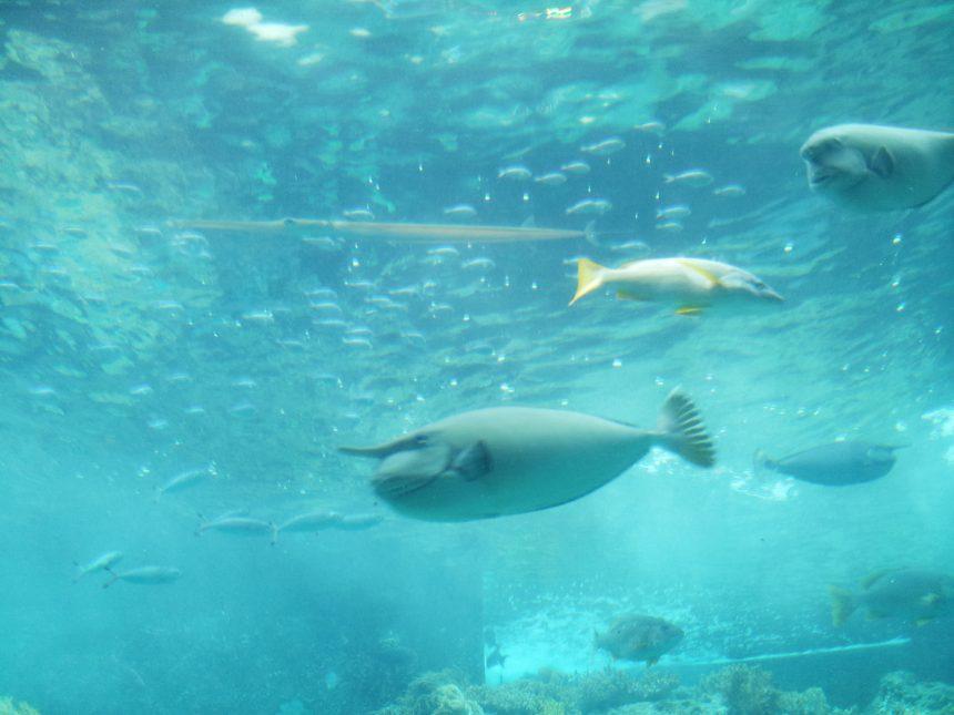 角のようなモノがはえた魚