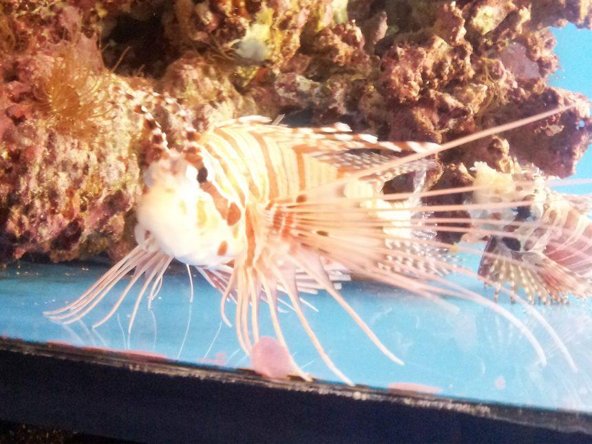 トゲトゲの魚
