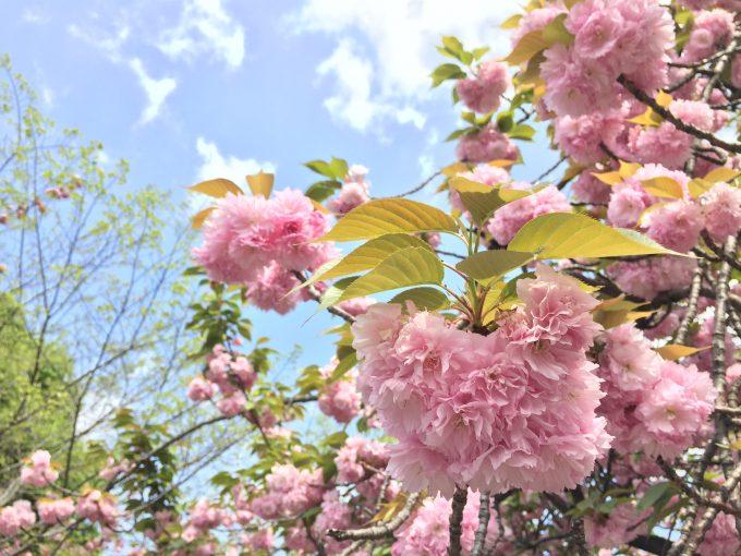 咲き誇る花
