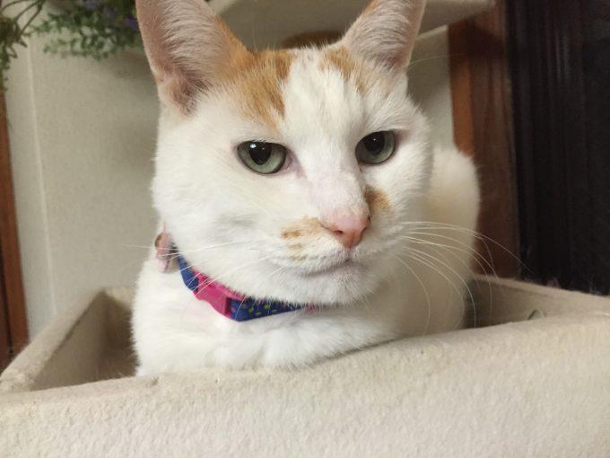 キャットタワーでくつろぐ猫