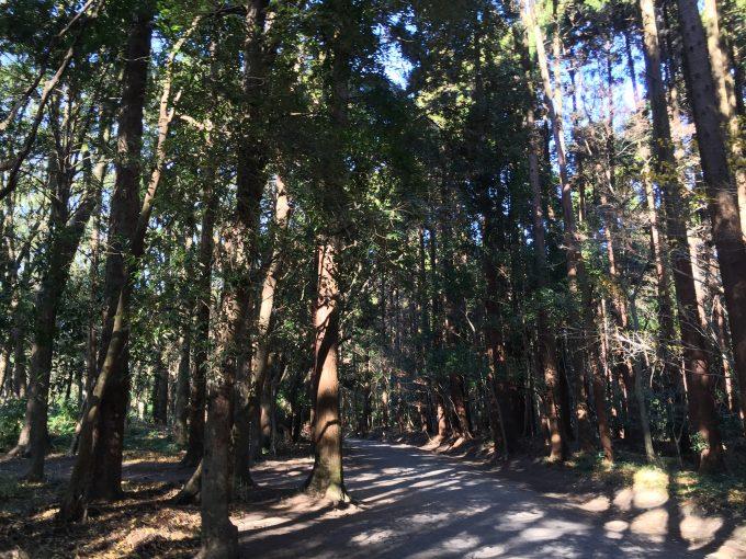 宮崎神宮へ続くうっそうと木が茂る横の参道