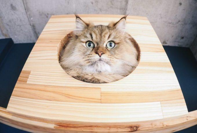 驚きの表情とともに理解した様子の猫