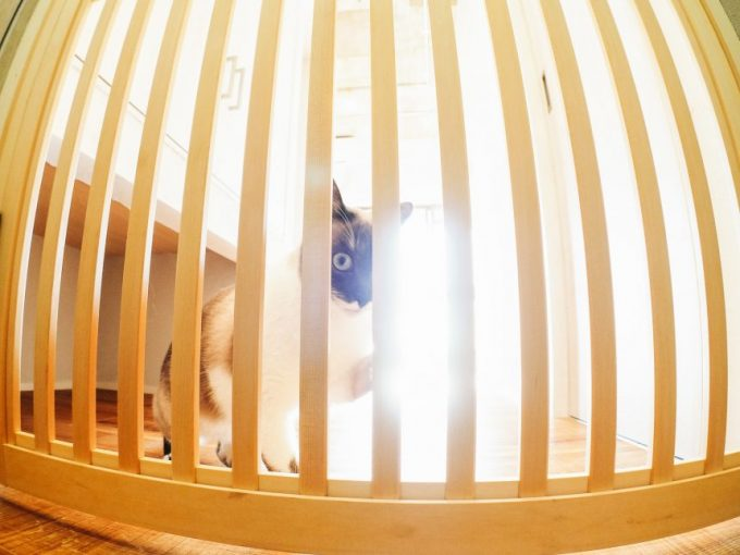損をしたような眼でこちらを見る柵の向こうの猫