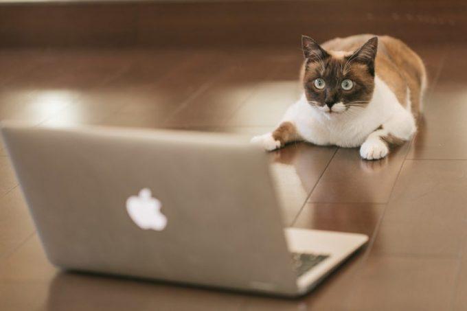 パソコンで投資画面を見る猫