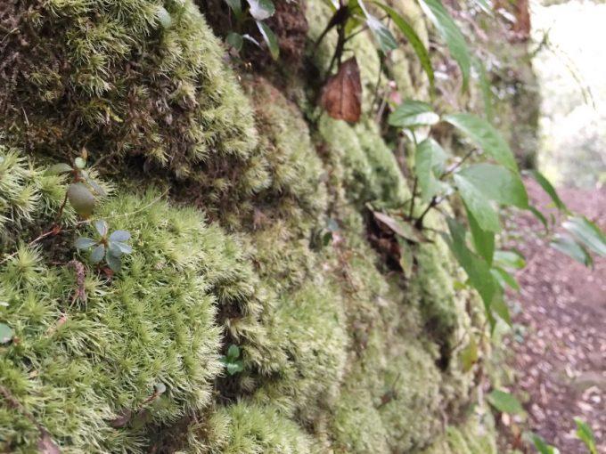 土壁にびっしり生えた苔