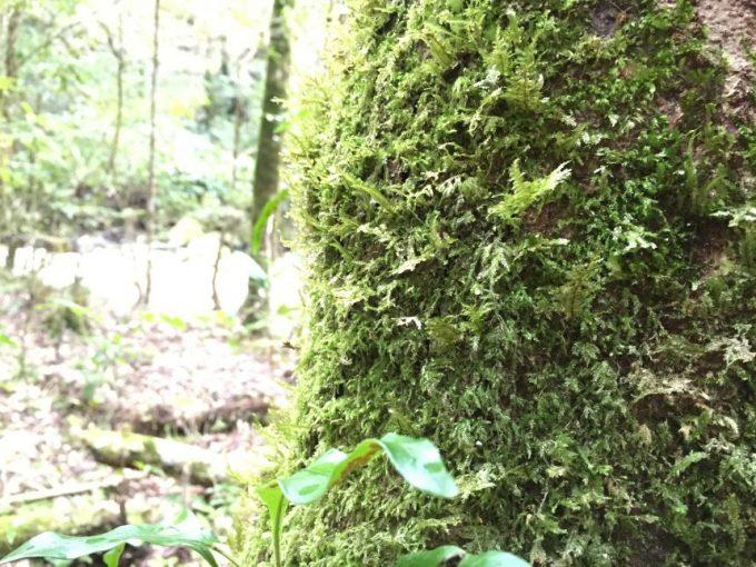 木にびっしり生えた苔