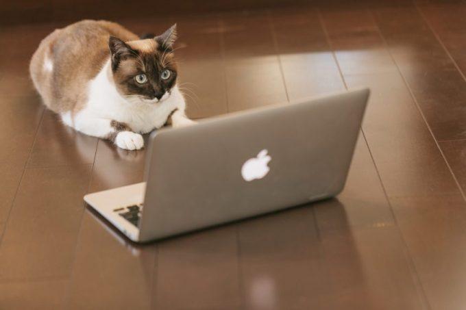 入金されたかパソコンの画面を見つめる猫