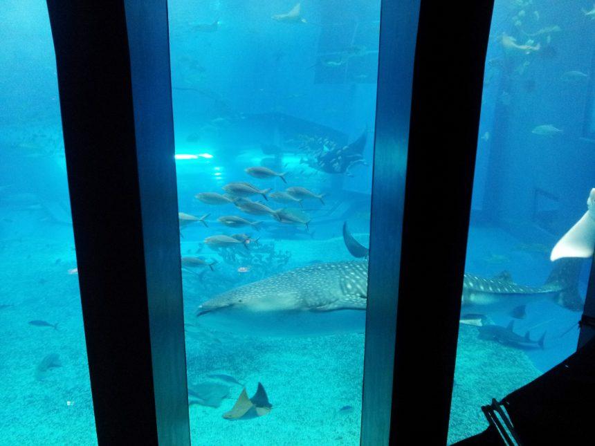 柱の隙間からチラ見えするジンベエザメ