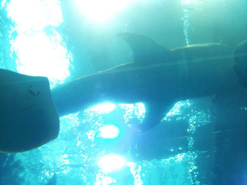 あたまの上のを通るサメ