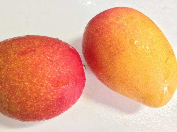 赤々と実ったマンゴーの実二個